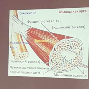 Анатомия в Школе инструкторов йоги Федерации йоги России